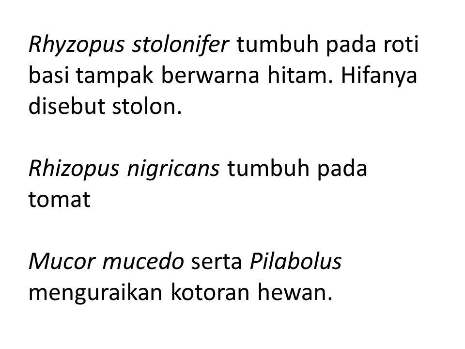 Rhyzopus stolonifer tumbuh pada roti basi tampak berwarna hitam. Hifanya disebut stolon. Rhizopus nigricans tumbuh pada tomat Mucor mucedo serta Pilab