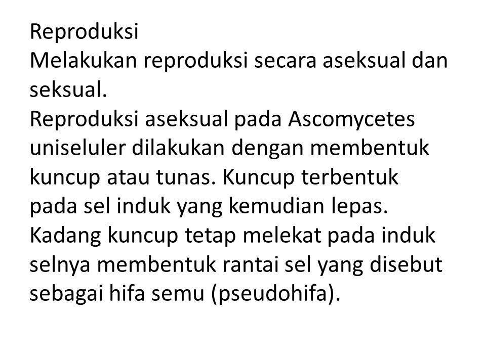 Reproduksi Melakukan reproduksi secara aseksual dan seksual. Reproduksi aseksual pada Ascomycetes uniseluler dilakukan dengan membentuk kuncup atau tu
