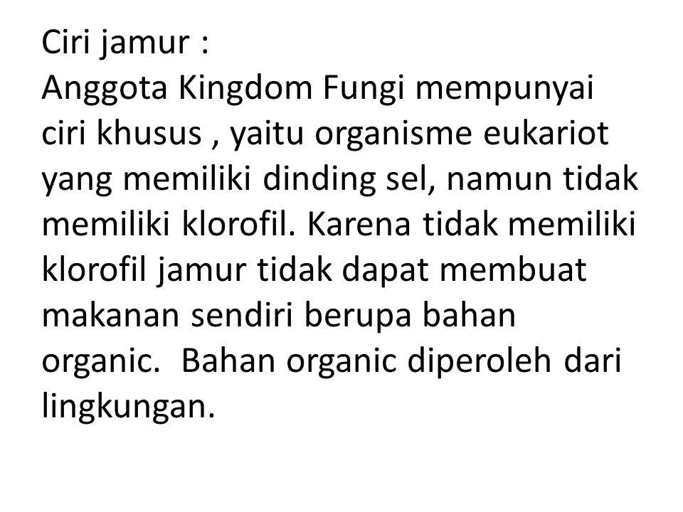 Ciri jamur : Anggota Kingdom Fungi mempunyai ciri khusus, yaitu organisme eukariot yang memiliki dinding sel, namun tidak memiliki klorofil. Karena ti