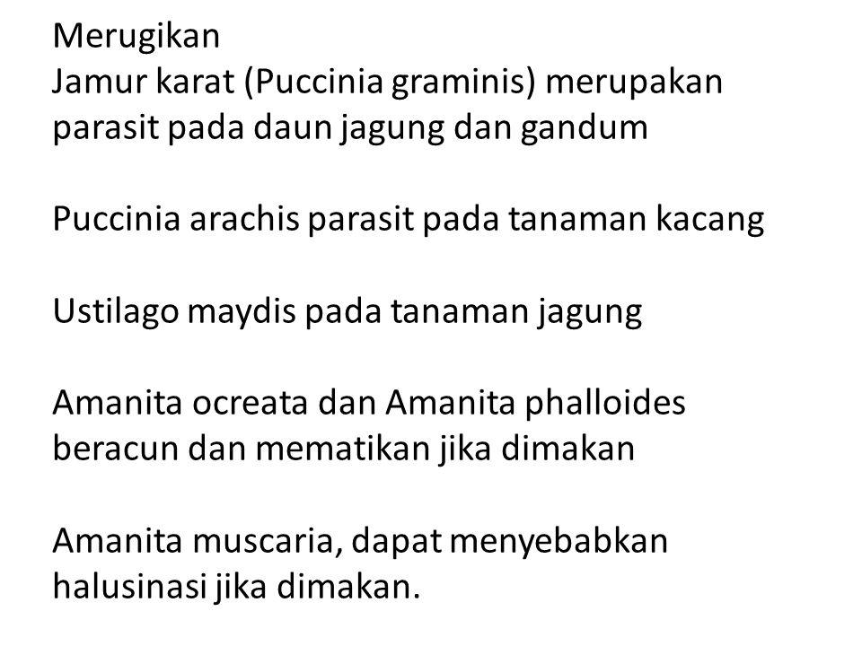 Merugikan Jamur karat (Puccinia graminis) merupakan parasit pada daun jagung dan gandum Puccinia arachis parasit pada tanaman kacang Ustilago maydis p
