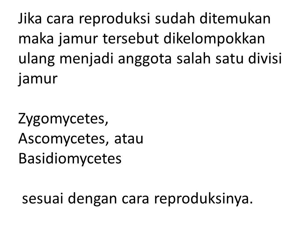 Jika cara reproduksi sudah ditemukan maka jamur tersebut dikelompokkan ulang menjadi anggota salah satu divisi jamur Zygomycetes, Ascomycetes, atau Ba