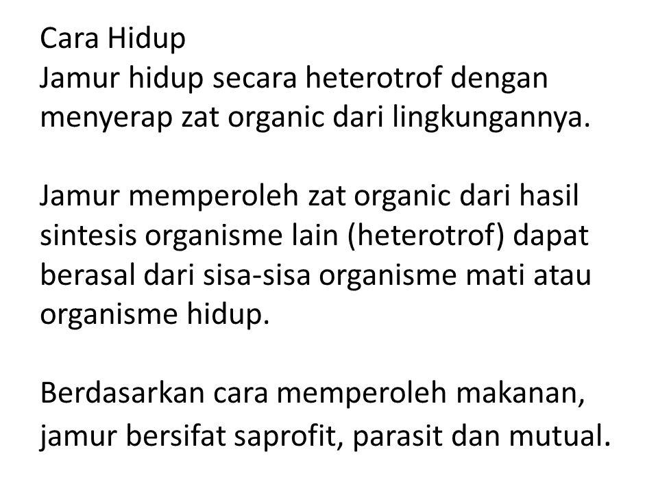 Cara Hidup Jamur hidup secara heterotrof dengan menyerap zat organic dari lingkungannya. Jamur memperoleh zat organic dari hasil sintesis organisme la