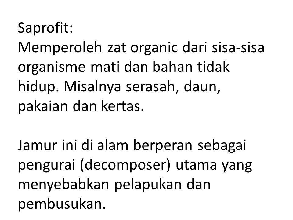 Saprofit: Memperoleh zat organic dari sisa-sisa organisme mati dan bahan tidak hidup. Misalnya serasah, daun, pakaian dan kertas. Jamur ini di alam be