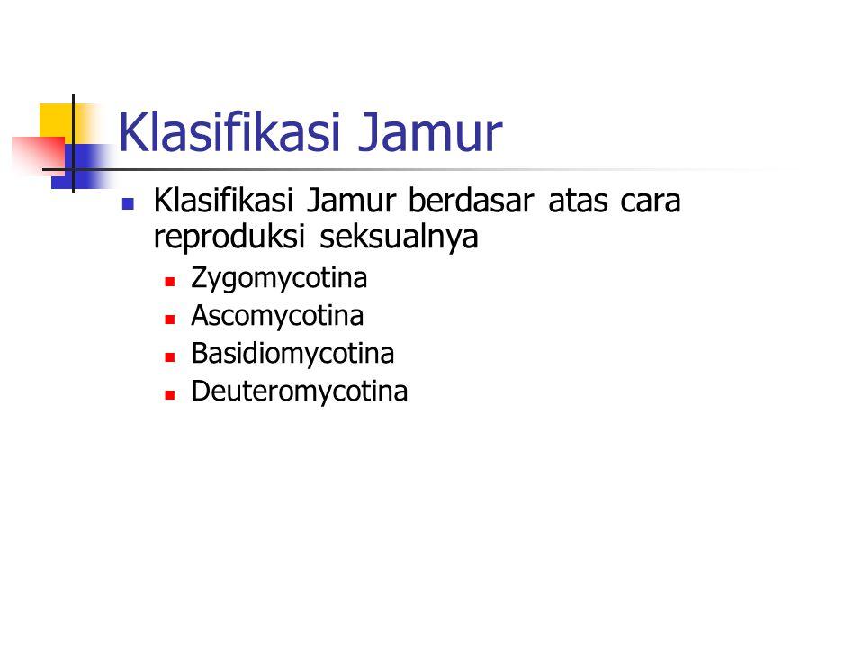 Klasifikasi Jamur Klasifikasi Jamur berdasar atas cara reproduksi seksualnya Zygomycotina Ascomycotina Basidiomycotina Deuteromycotina