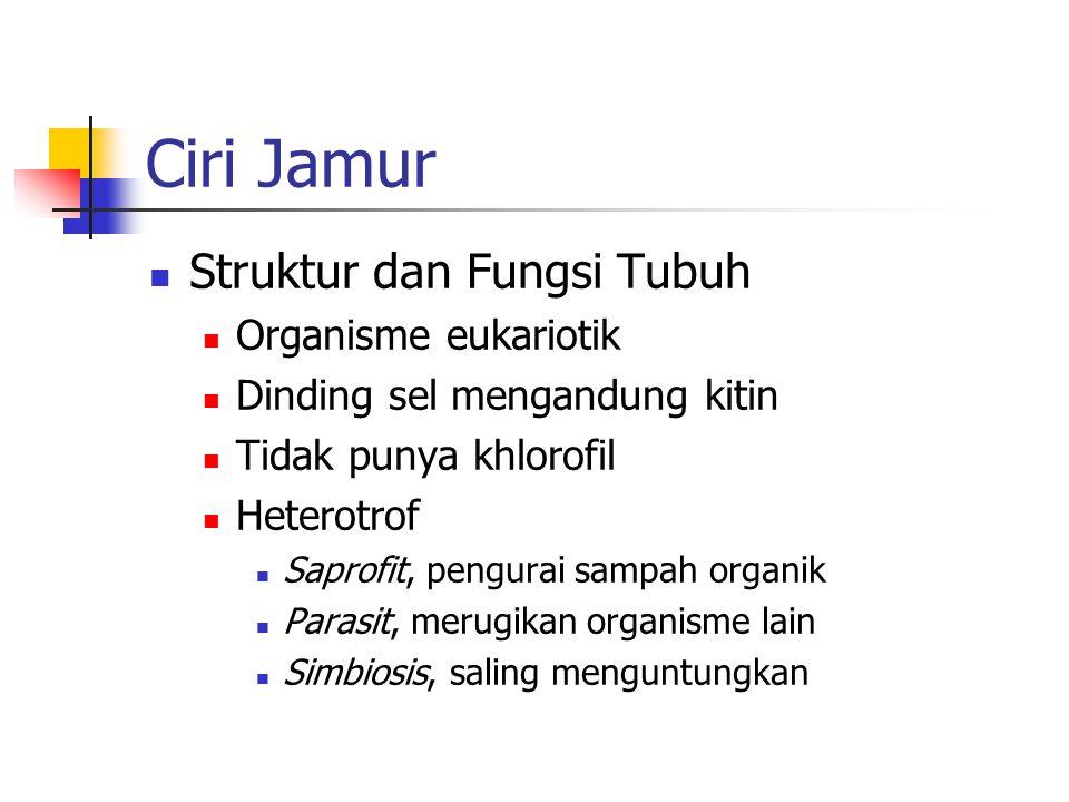 Ciri Jamur Struktur dan Fungsi Tubuh Organisme eukariotik Dinding sel mengandung kitin Tidak punya khlorofil Heterotrof Saprofit, pengurai sampah orga