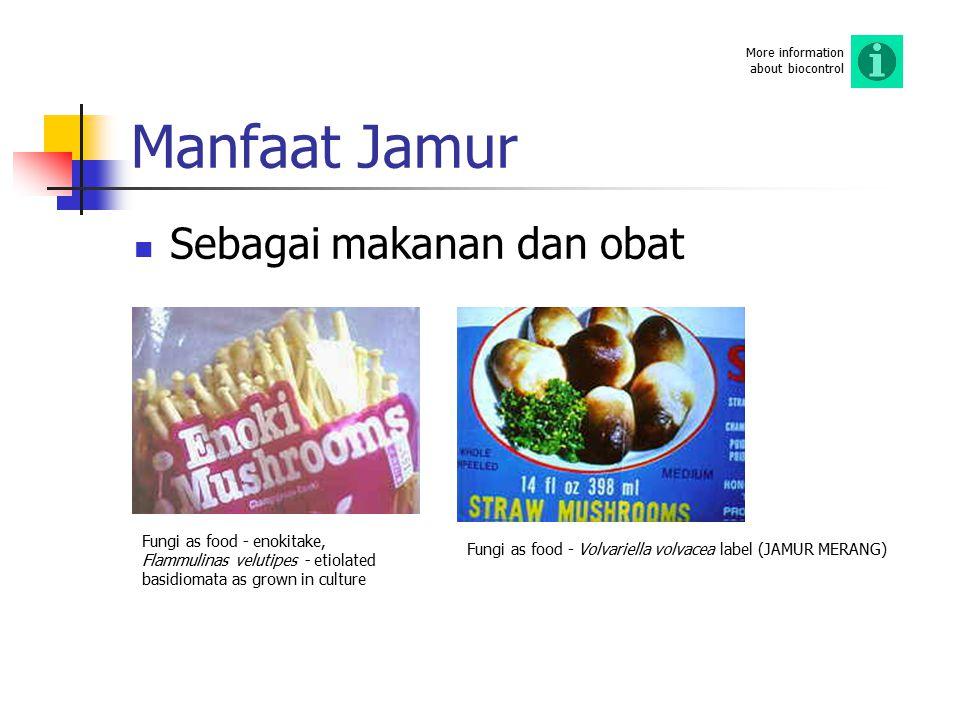 Manfaat Jamur Sebagai makanan dan obat Fungi as food - enokitake, Flammulinas velutipes - etiolated basidiomata as grown in culture Fungi as food - Vo