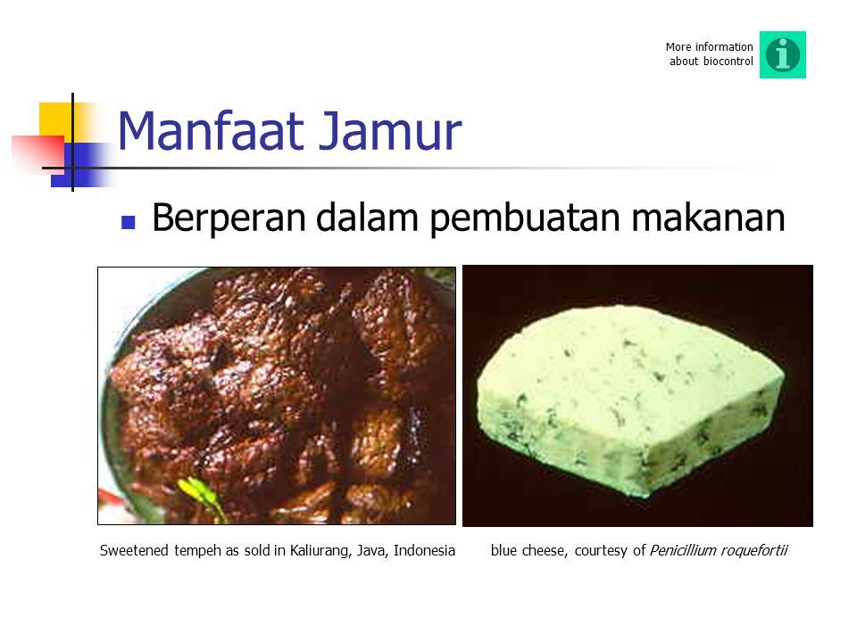 Manfaat Jamur Berperan dalam pembuatan makanan More information about biocontrol Sweetened tempeh as sold in Kaliurang, Java, Indonesiablue cheese, co