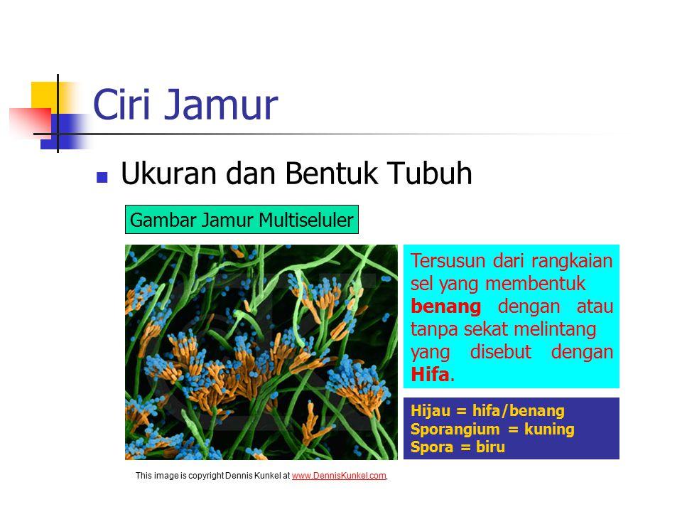 Ciri Jamur