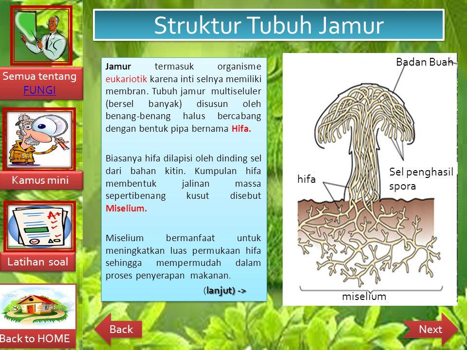 Back to HOME Latihan soal Latihan soal Kamus mini Kamus mini Semua tentang FUNGI FUNGI Semua tentang FUNGI FUNGI Next Back Struktur Tubuh Jamur Jamur termasuk organisme eukariotik karena inti selnya memiliki membran.