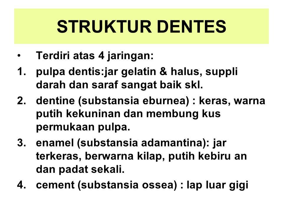 STRUKTUR DENTES Terdiri atas 4 jaringan: 1.pulpa dentis:jar gelatin & halus, suppli darah dan saraf sangat baik skl. 2.dentine (substansia eburnea) :