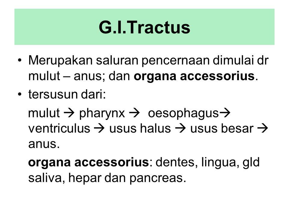 G.I.Tractus Merupakan saluran pencernaan dimulai dr mulut – anus; dan organa accessorius. tersusun dari: mulut  pharynx  oesophagus  ventriculus 