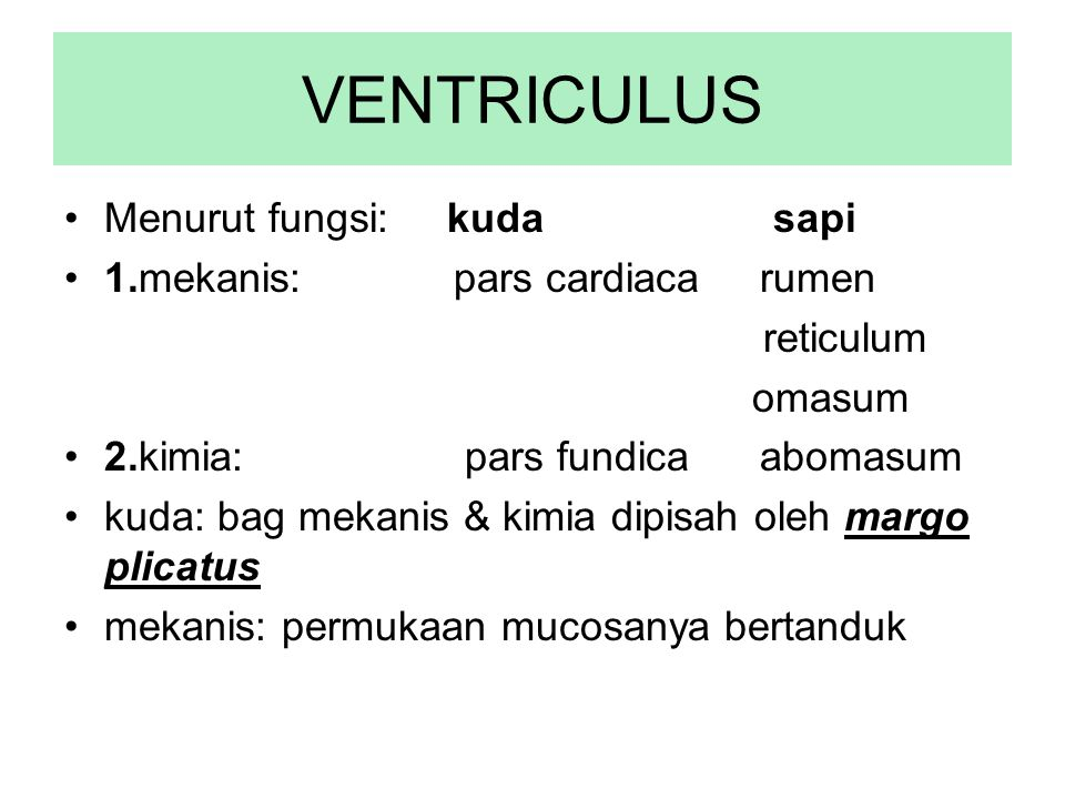 VENTRICULUS Menurut fungsi: kuda sapi 1.mekanis: pars cardiaca rumen reticulum omasum 2.kimia: pars fundica abomasum kuda: bag mekanis & kimia dipisah
