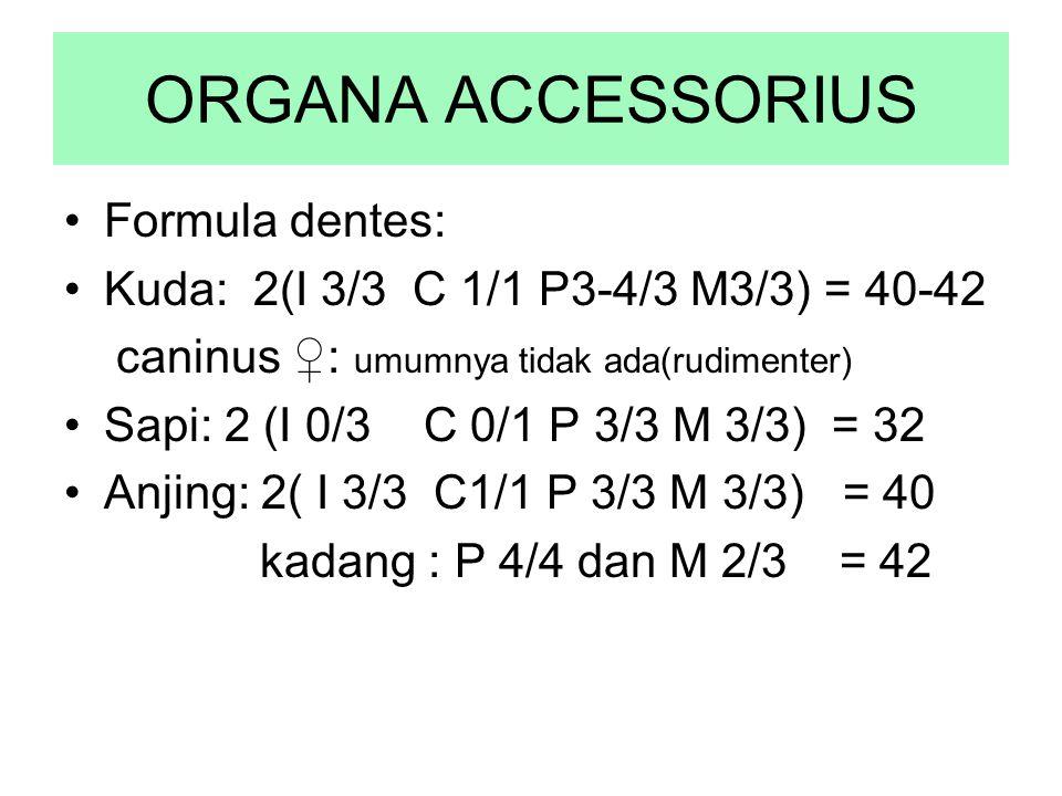 ORGANA ACCESSORIUS Formula dentes: Kuda: 2(I 3/3 C 1/1 P3-4/3 M3/3) = 40-42 caninus ♀: umumnya tidak ada(rudimenter) Sapi: 2 (I 0/3 C 0/1 P 3/3 M 3/3)