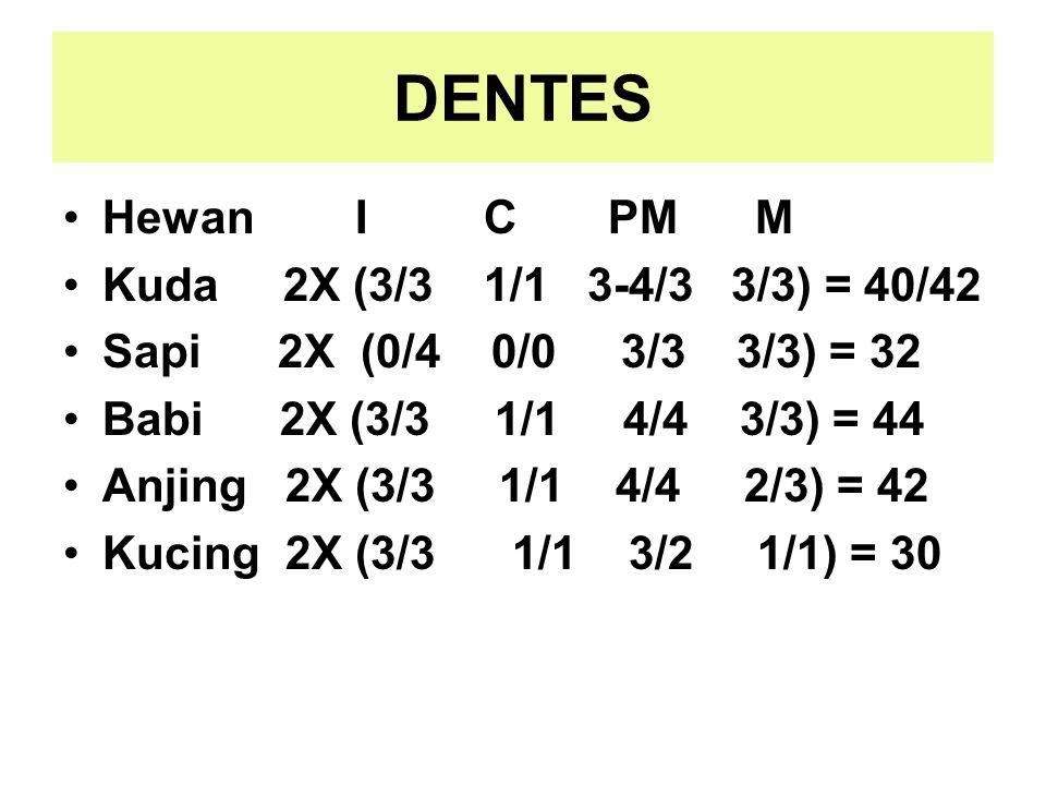 DENTES Hewan I C PM M Kuda 2X (3/3 1/1 3-4/3 3/3) = 40/42 Sapi 2X (0/4 0/0 3/3 3/3) = 32 Babi 2X (3/3 1/1 4/4 3/3) = 44 Anjing 2X (3/3 1/1 4/4 2/3) =