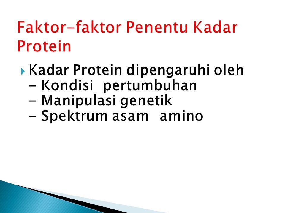  Kadar Protein dipengaruhi oleh - Kondisi pertumbuhan - Manipulasi genetik - Spektrum asam amino