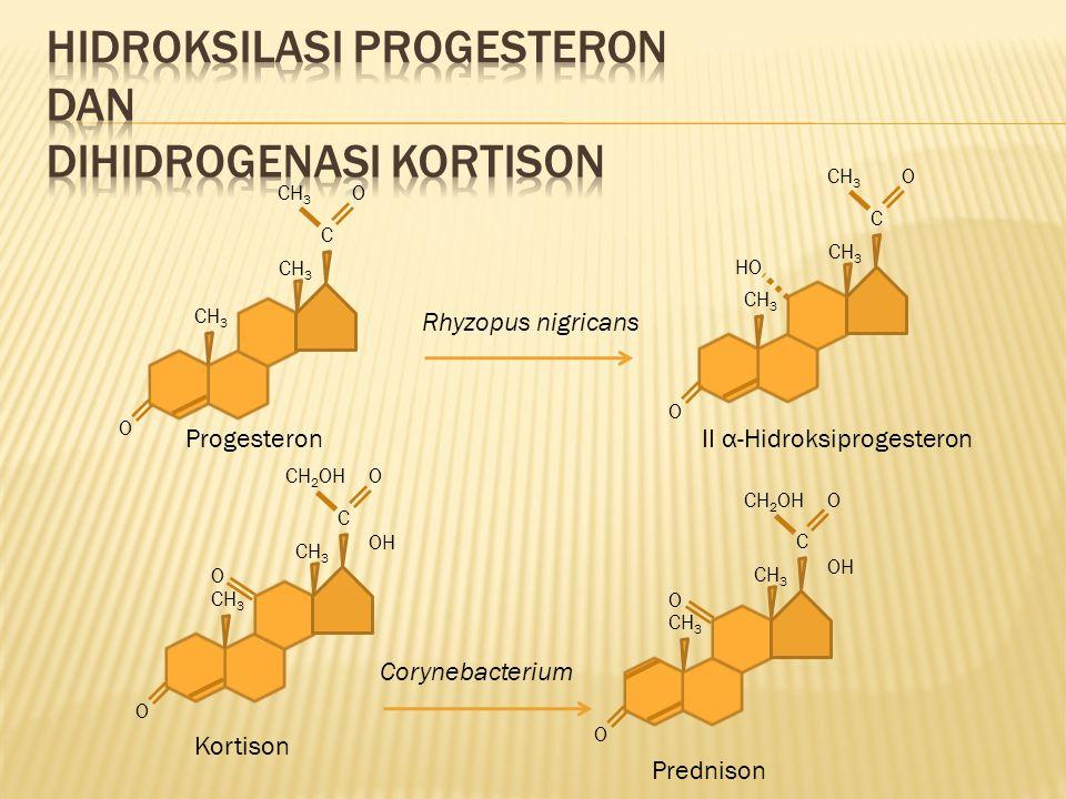 O CH 3 C O O C O HO ProgesteronII α-Hidroksiprogesteron Rhyzopus nigricans O CH 3 C CH 2 OHO O OH Kortison O CH 3 C CH 2 OHO O OH Prednison Corynebact