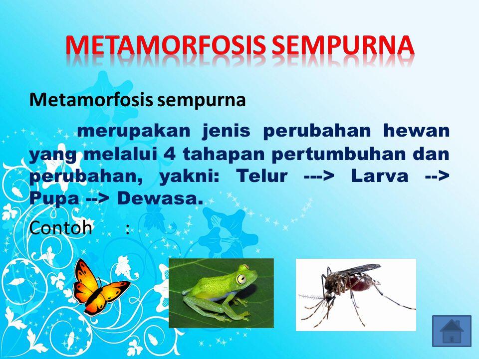 Daur Hidup Hewan di Lingkungan Sekitar Metamorfosis Sempurna Metamorfosis Sempurna Metamorfosis Tidak Sempurna Metamorfosis Tidak Sempurna Tidak Mengalami Metamorfosis Tidak Mengalami Metamorfosis