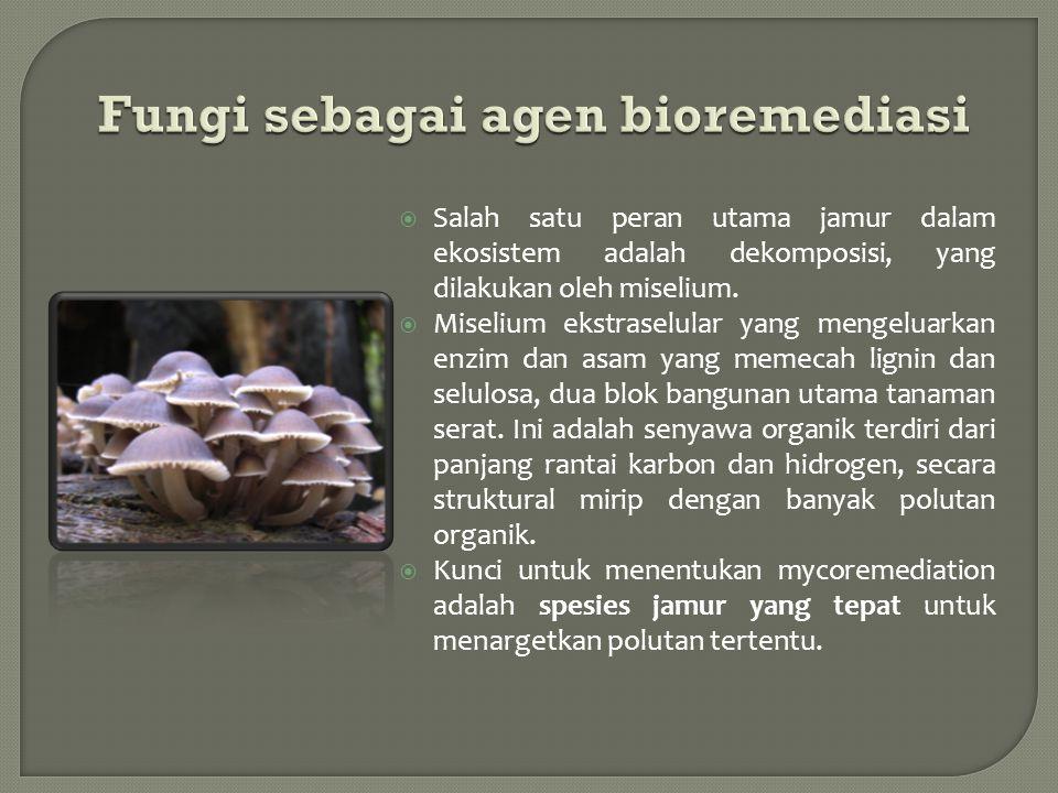  Salah satu peran utama jamur dalam ekosistem adalah dekomposisi, yang dilakukan oleh miselium.  Miselium ekstraselular yang mengeluarkan enzim dan