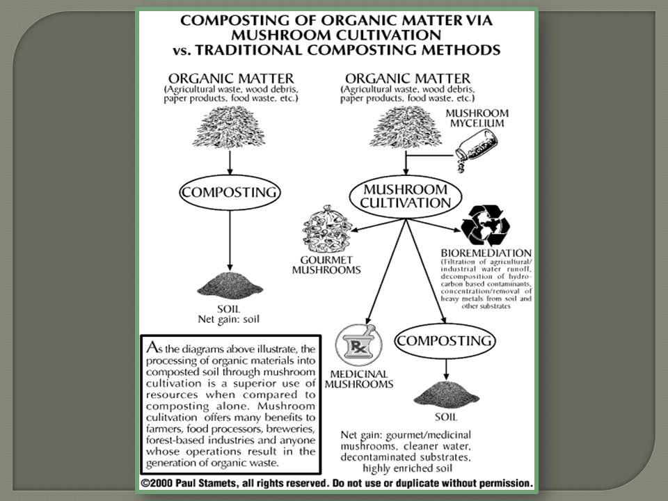  Biomineralization of Heavy Metals Fungi dapat digunakan untuk proses removal dan recovery logam berat pada limbah air dan efluen industri seperti Hg, Cu, Ni, Pb, Cd.