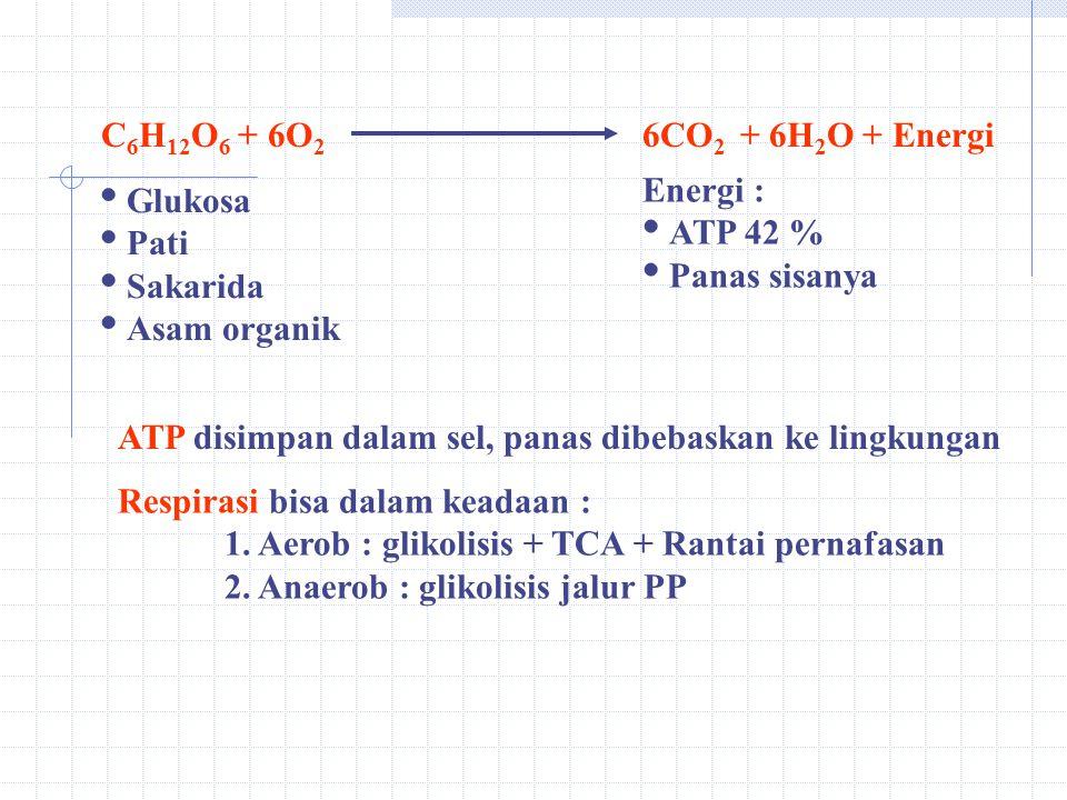 C 6 H 12 O 6 + 6O 2 6CO 2 + 6H 2 O + Energi  Glukosa  Pati  Sakarida  Asam organik Energi :  ATP 42 %  Panas sisanya ATP disimpan dalam sel, panas dibebaskan ke lingkungan Respirasi bisa dalam keadaan : 1.