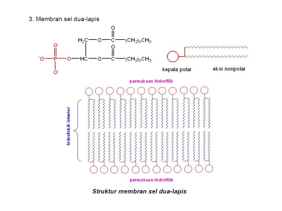 Struktur membran sel dua-lapis 3. Membran sel dua-lapis