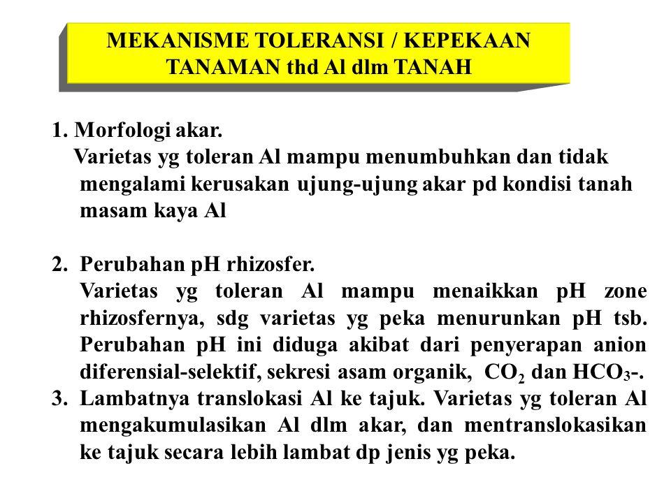MEKANISME TOLERANSI / KEPEKAAN TANAMAN thd Al dlm TANAH 1. Morfologi akar. Varietas yg toleran Al mampu menumbuhkan dan tidak mengalami kerusakan ujun