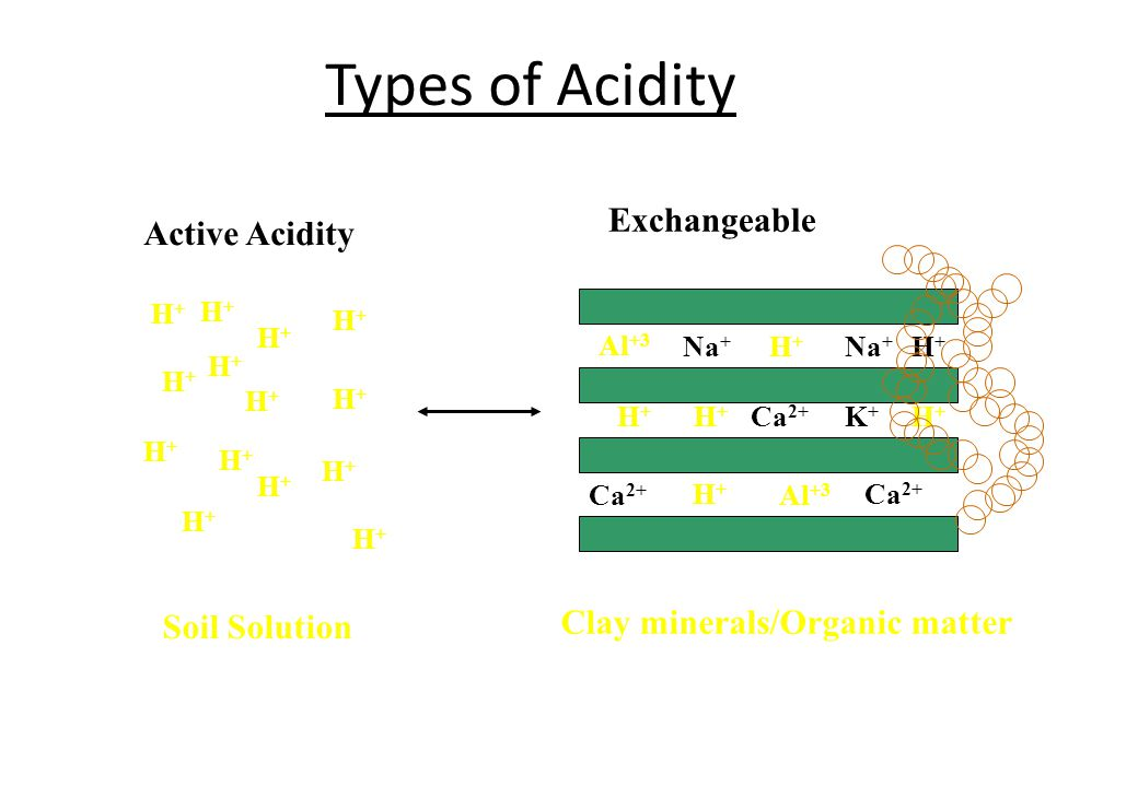 Types of Acidity Active Acidity H+H+ H+H+ H+H+ H+H+ H+H+ H+H+ H+H+ H+H+ H+H+ H+H+ H+H+ H+H+ H+H+ H+H+ Soil Solution Al +3 Na + H+H+ H+H+ H+H+ K+K+ H+H+ Al +3 Na + Ca 2+ H+H+ H+H+ Clay minerals/Organic matter Exchangeable