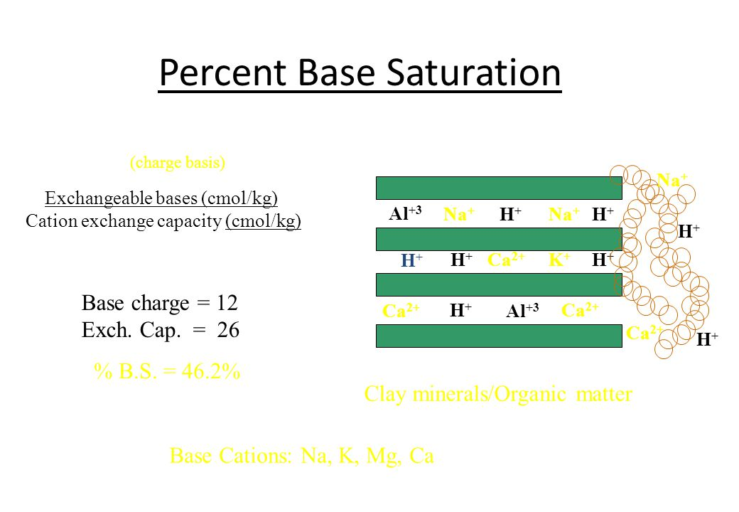 Percent Base Saturation Al +3 Na + H+H+ H+H+ H+H+ K+K+ H+H+ Al +3 Na + Ca 2+ H+H+ H+H+ Clay minerals/Organic matter Na + Ca 2+ H+H+ H+H+ Exchangeable