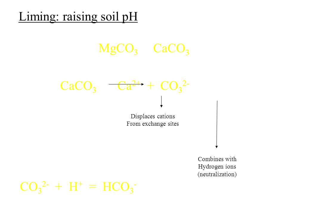 CaCO 3 CaCO 3 Ca 2+ + CO 3 2- Displaces cations From exchange sites Combines with Hydrogen ions (neutralization) Liming: raising soil pH MgCO 3 CO 3 2