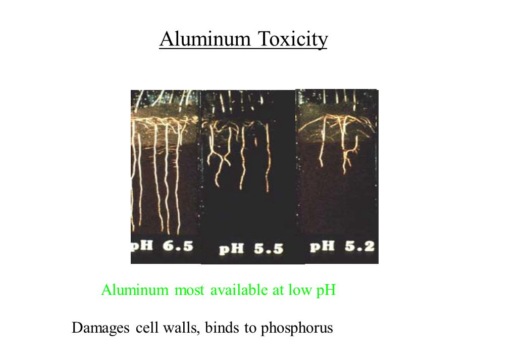 Aluminum Toxicity Aluminum most available at low pH Damages cell walls, binds to phosphorus