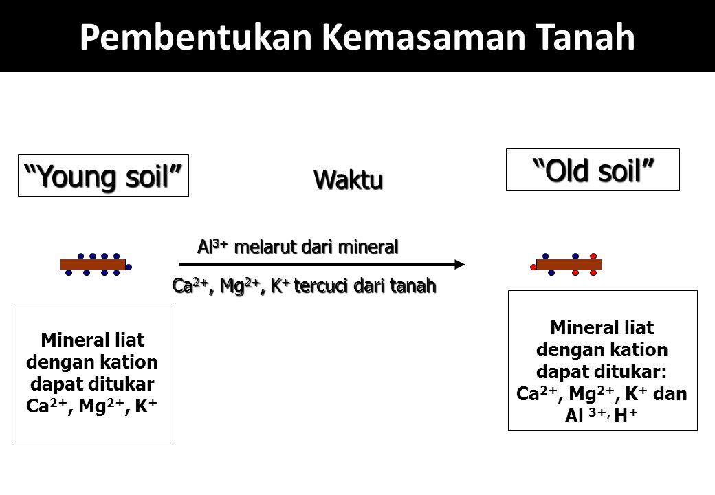 "Pembentukan Kemasaman Tanah Mineral liat dengan kation dapat ditukar Ca 2+, Mg 2+, K + ""Young soil"" Waktu Al 3+ melarut dari mineral Ca 2+, Mg 2+, K +"
