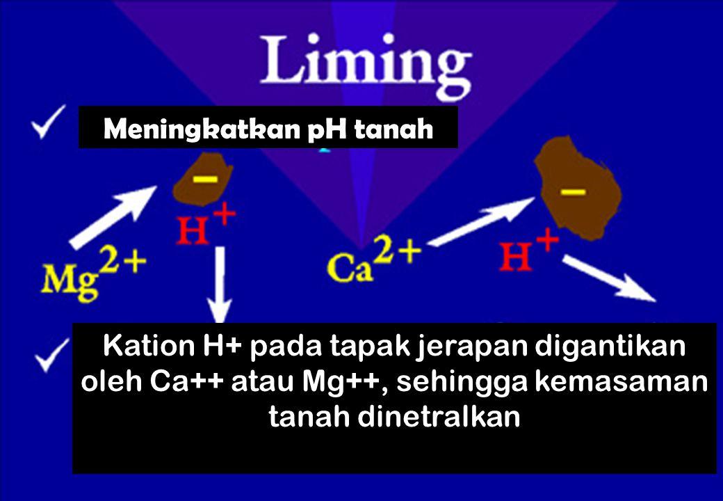 Meningkatkan pH tanah Kation H+ pada tapak jerapan digantikan oleh Ca++ atau Mg++, sehingga kemasaman tanah dinetralkan