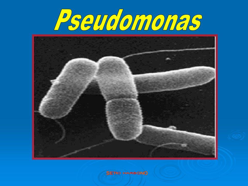 Jenis mikroba penyebab Infeksi Jenis mikroba penyebab Infeksi Nosokomial : Nosokomial : - Bakteri Gram negatif yang sering : - Bakteri Gram negatif yang sering : - Pseudomonas aeruginosa - Pseudomonas aeruginosa - Acinetobacter baumanni - Acinetobacter baumanni - Klebsiella pneumoniae ESBL - Klebsiella pneumoniae ESBL - Escherichia coli ESBL - Escherichia coli ESBL - Enterobacter spp.