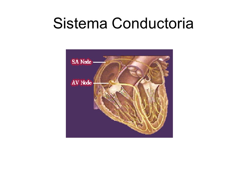 Sistema Conductoria