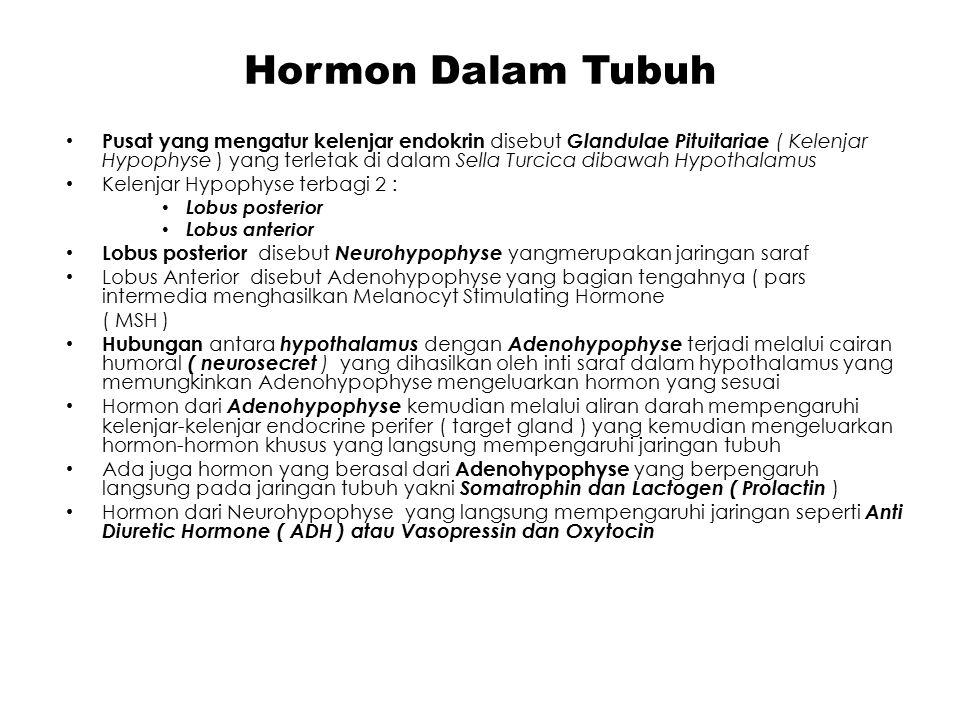 Neurohypofise & Adenohypofise Neurohypophyse adalah pusat hormonal yang mengatur hormon Antidiuretik hormon (ADH) atau Vasopresin dan Oksitosin Adenohypofise adalah pusat hormonal yang mengatur dan mengendalikan hormon-hormon sbb: Somatotrophormon (STH) yang berfungsi merangsang metabolisme lemak, pembentukan protein dan pertumbuhan ACTH yang merangsang kelenjar adrenal mensekresikan glukokortikoid dan mengontrol pertumbuhan