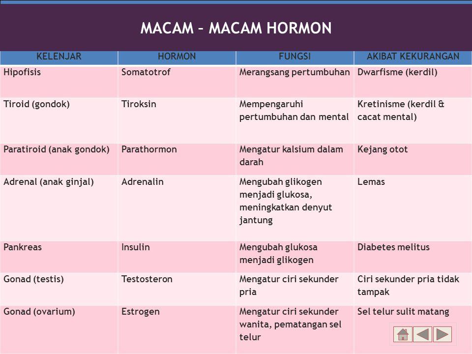 Rela Berbagi Ikhlas Memberi KELENJARHORMONFUNGSIAKIBAT KEKURANGAN HipofisisSomatotrofMerangsang pertumbuhanDwarfisme (kerdil) Tiroid (gondok)Tiroksin Mempengaruhi pertumbuhan dan mental Kretinisme (kerdil & cacat mental) Paratiroid (anak gondok)Parathormon Mengatur kalsium dalam darah Kejang otot Adrenal (anak ginjal)Adrenalin Mengubah glikogen menjadi glukosa, meningkatkan denyut jantung Lemas PankreasInsulin Mengubah glukosa menjadi glikogen Diabetes melitus Gonad (testis)Testosteron Mengatur ciri sekunder pria Ciri sekunder pria tidak tampak Gonad (ovarium)EstrogenMengatur ciri sekunder wanita, pematangan sel telur Sel telur sulit matang MACAM – MACAM HORMON