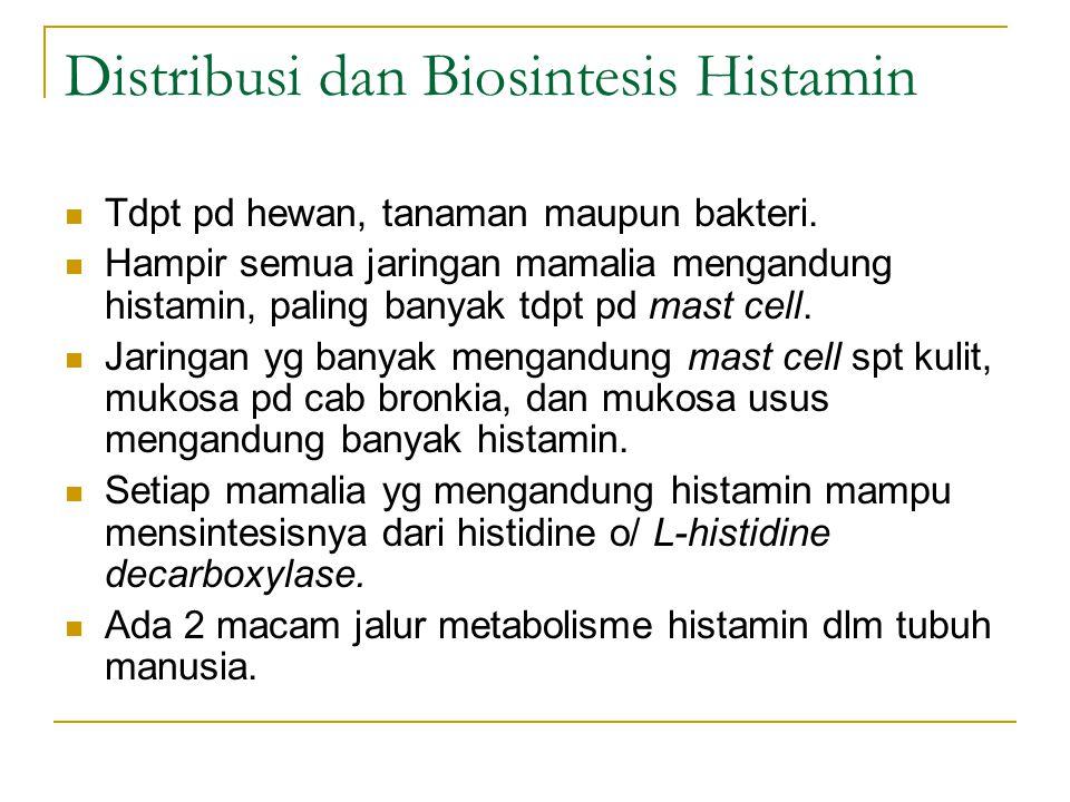 Distribusi dan Biosintesis Histamin Tdpt pd hewan, tanaman maupun bakteri. Hampir semua jaringan mamalia mengandung histamin, paling banyak tdpt pd ma