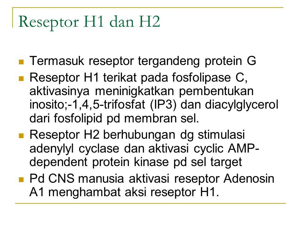 Reseptor H1 dan H2 Termasuk reseptor tergandeng protein G Reseptor H1 terikat pada fosfolipase C, aktivasinya meninigkatkan pembentukan inosito;-1,4,5