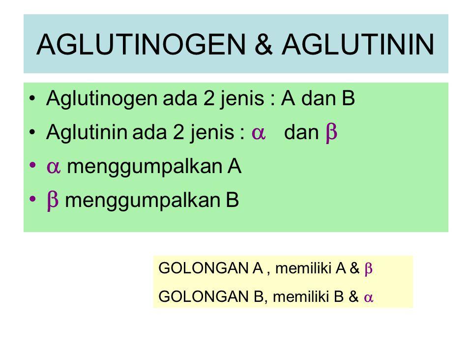 AGLUTINOGEN & AGLUTININ Aglutinogen ada 2 jenis : A dan B Aglutinin ada 2 jenis :  dan   menggumpalkan A  menggumpalkan B GOLONGAN A, memiliki A &
