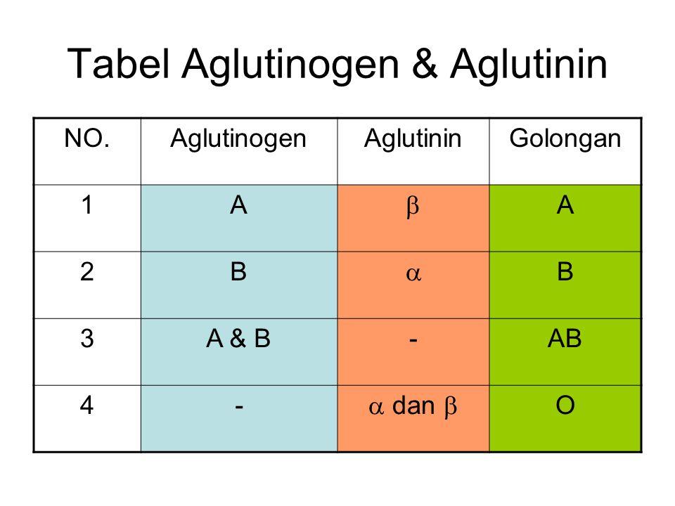 Tabel Aglutinogen & Aglutinin NO.AglutinogenAglutininGolongan 1A  A 2B  B 3A & B-AB 4-  dan  O