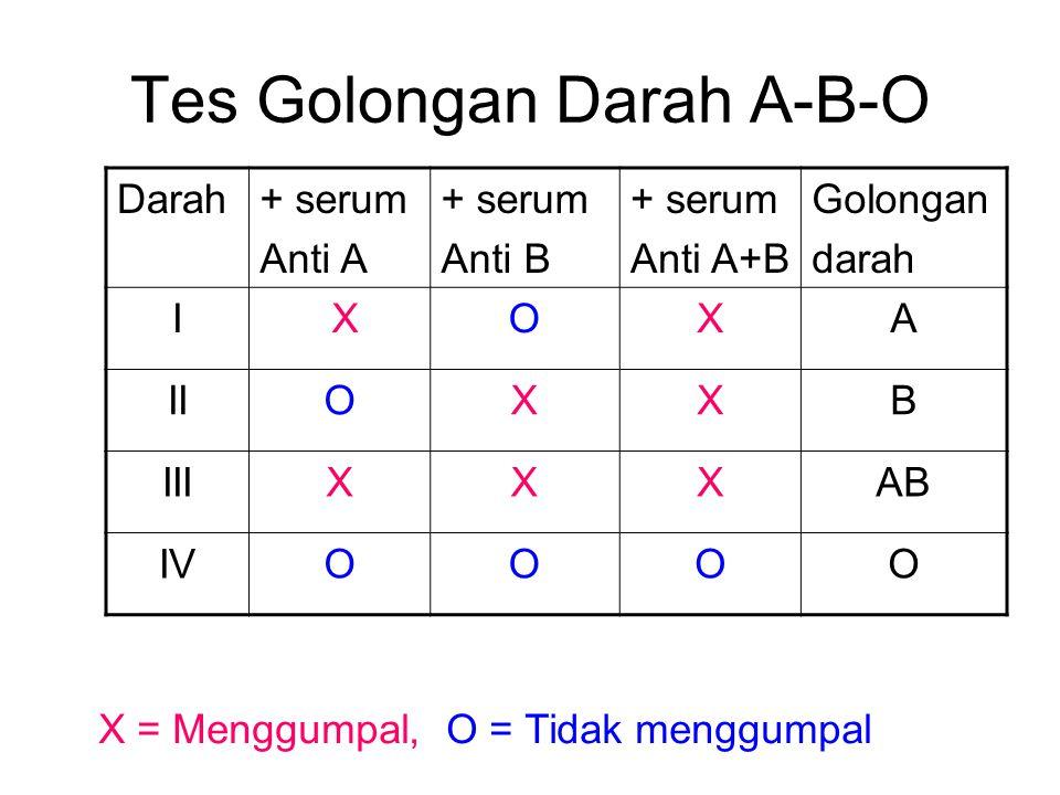 Tes Golongan Darah A-B-O Darah+ serum Anti A + serum Anti B + serum Anti A+B Golongan darah I XOXA IIOXXB IIIXXXAB IVOOOO X = Menggumpal, O = Tidak me