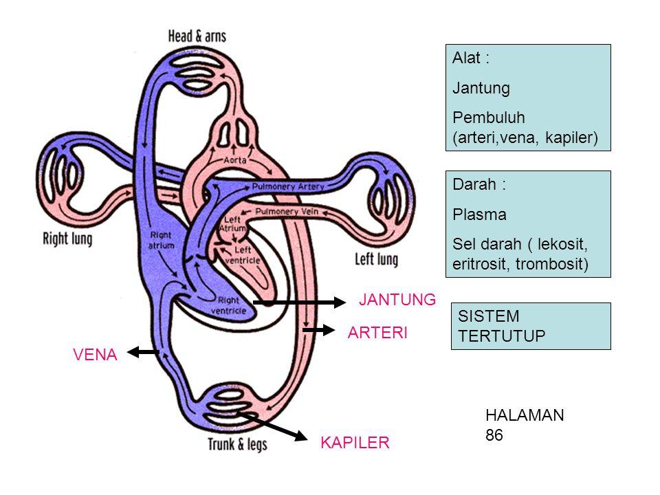 Alat : Jantung Pembuluh (arteri,vena, kapiler) Darah : Plasma Sel darah ( lekosit, eritrosit, trombosit) ARTERI VENA KAPILER JANTUNG HALAMAN 86 SISTEM TERTUTUP