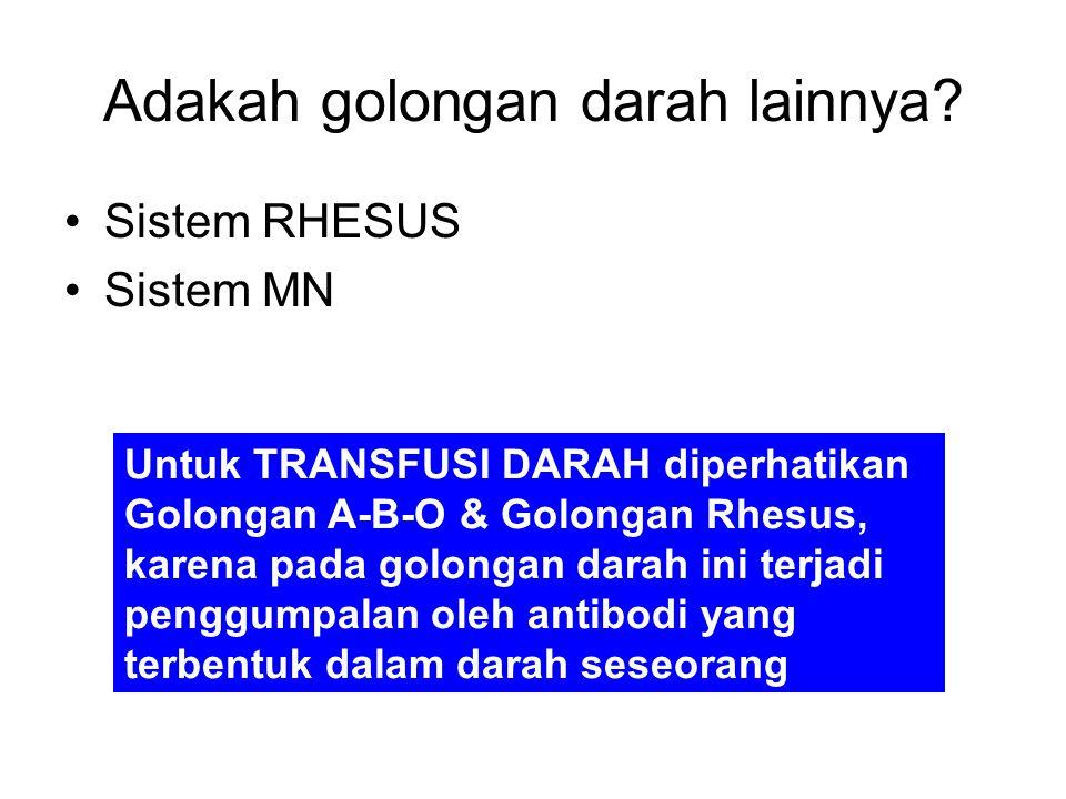 Adakah golongan darah lainnya? Sistem RHESUS Sistem MN Untuk TRANSFUSI DARAH diperhatikan Golongan A-B-O & Golongan Rhesus, karena pada golongan darah