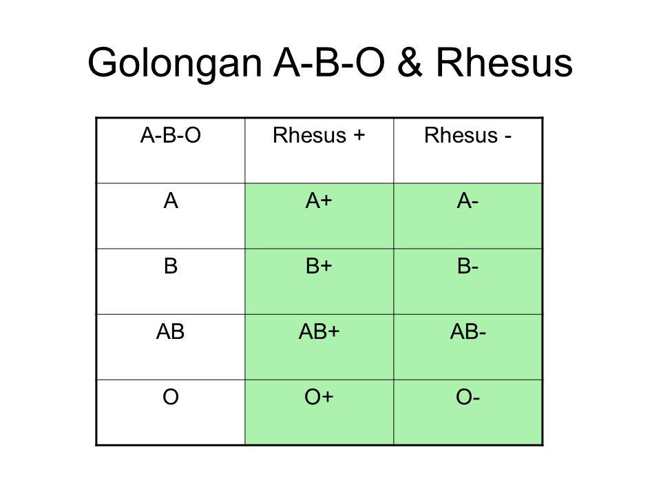 Golongan A-B-O & Rhesus A-B-ORhesus +Rhesus - AA+A- BB+B- ABAB+AB- OO+O-