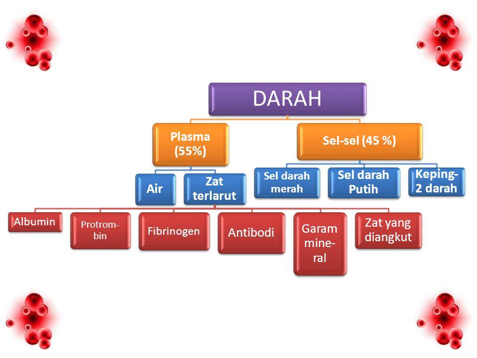 DARAH Plasma (55%) Air Zat terlarut Albumin Protrom- bin Fibrinogen Antibodi Garam mine- ral Zat yang diangkut Sel-sel (45 %) Sel darah merah Sel darah Putih Keping- 2 darah