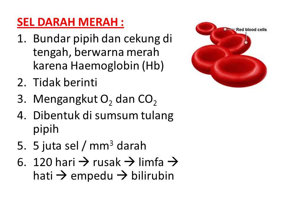 SEL DARAH MERAH : 1.Bundar pipih dan cekung di tengah, berwarna merah karena Haemoglobin (Hb) 2.Tidak berinti 3.Mengangkut O 2 dan CO 2 4.Dibentuk di sumsum tulang pipih 5.5 juta sel / mm 3 darah 6.120 hari  rusak  limfa  hati  empedu  bilirubin