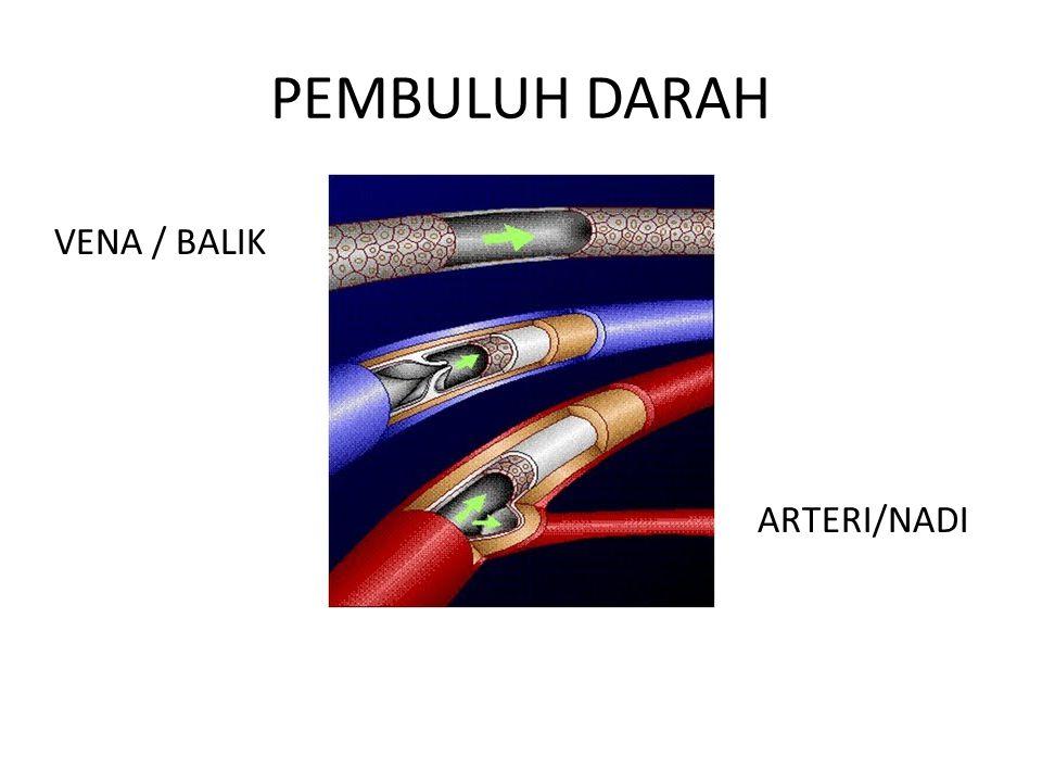 PEMBULUH DARAH ARTERI/NADI VENA / BALIK