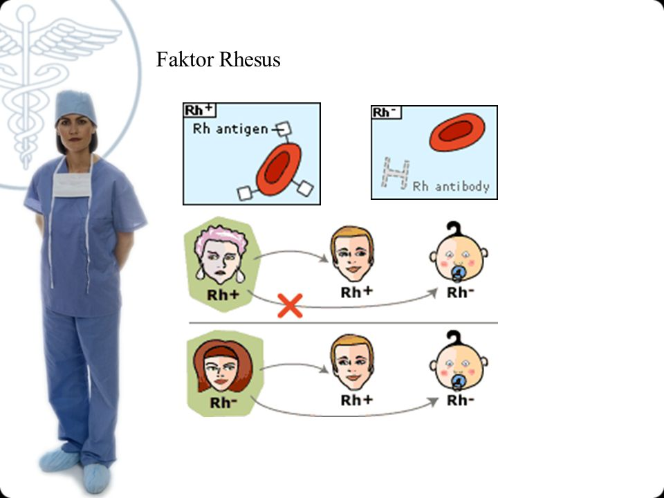 Faktor Rhesus