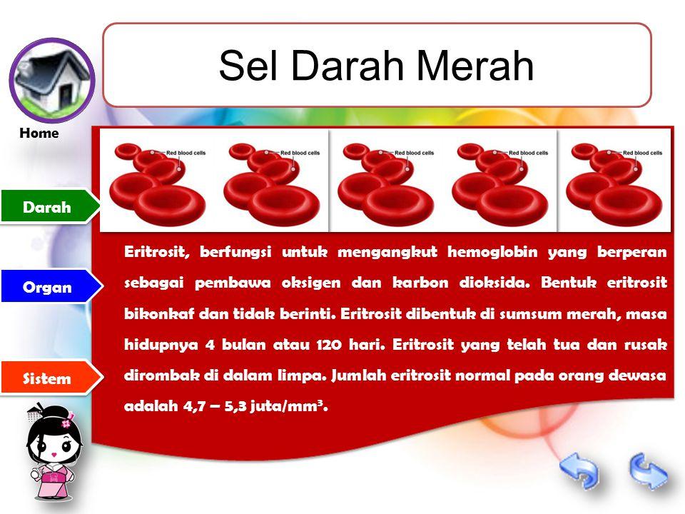 Sel Darah Merah Eritrosit, berfungsi untuk mengangkut hemoglobin yang berperan sebagai pembawa oksigen dan karbon dioksida.