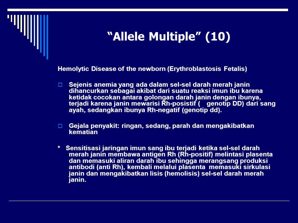 """""""Allele Multiple"""" (10) Hemolytic Disease of the newborn (Erythroblastosis Fetalis)  Sejenis anemia yang ada dalam sel-sel darah merah janin dihancurk"""